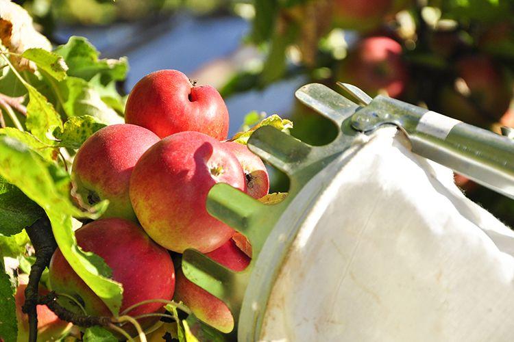 Jabĺčka z babičkinej záhrady - For a Healthy Life
